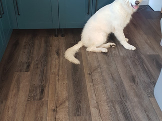 Colorado Rapids LVT Flooring