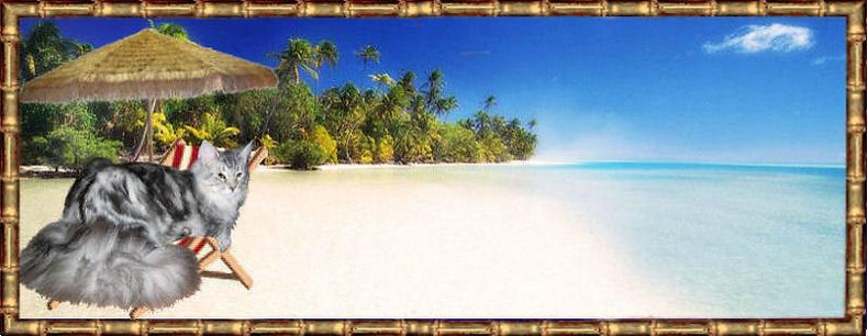 Beachcoons_umbrella_Gabriel_bamboo4-800x310.jpg