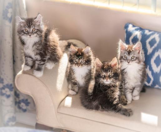 kittens-516x425.jpg
