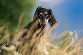 dog-3011994_1280.jpg