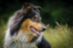 dog-733778_1280.jpg