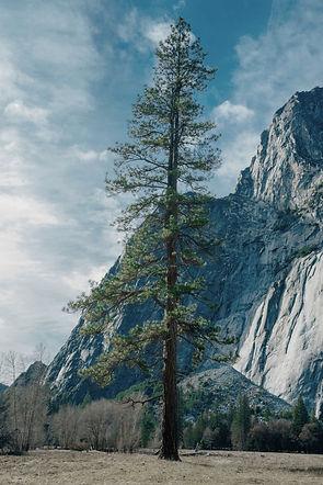 Pine%2520Tree_edited_edited.jpg