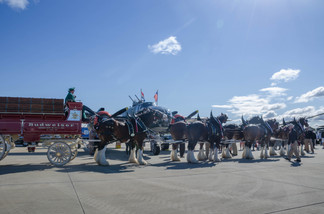 """Anheuser-Busch Clydesdales and B-25J Mitchell """"Show Me!"""""""