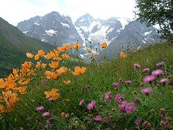 jardin alpin col du lautaret