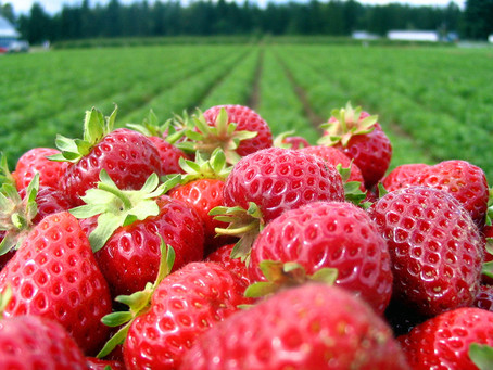 The Secret to California's Strawberries: A National Treasure