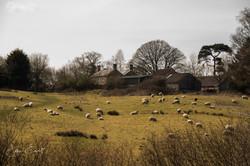 Farm on Becks Lane (1 of 1)