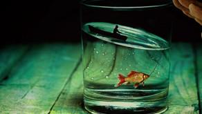 Lebst du wie ein Fisch?