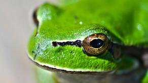 Die Geschichte vom Frosch ...