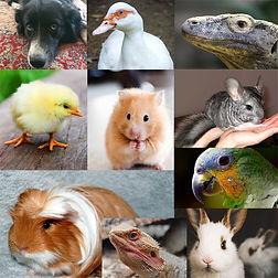 בעלי חיים.jpg