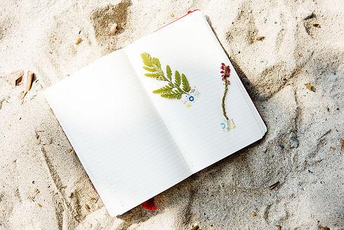 beach-2280942.jpg