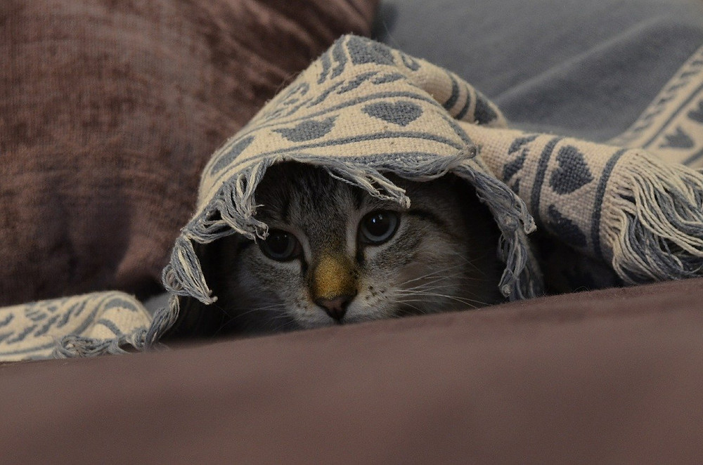 Cat hiding from fireworks