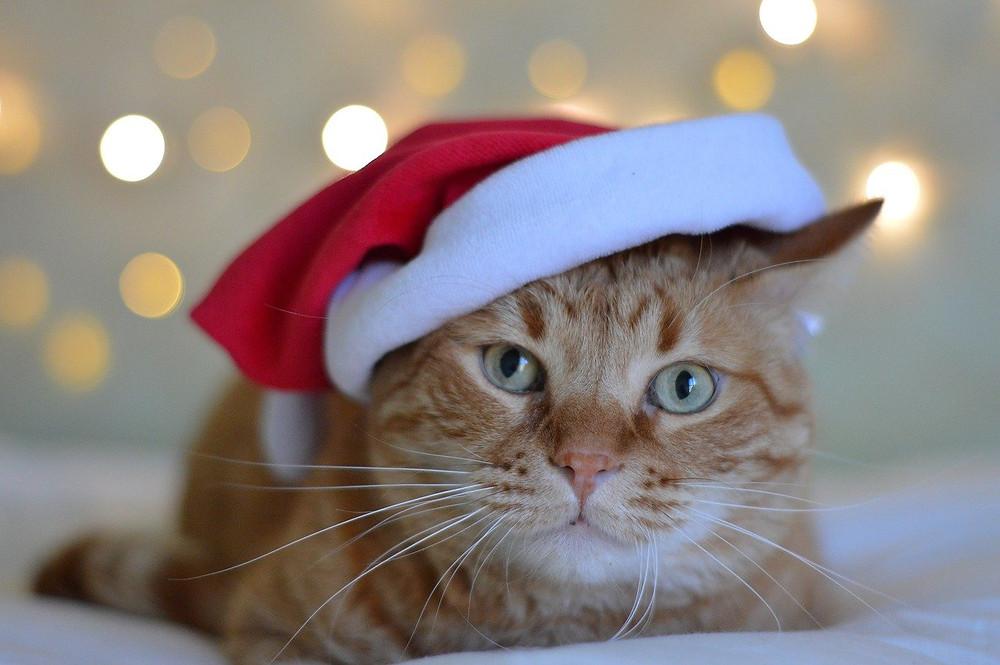 Cat wearing Christmas santa hat