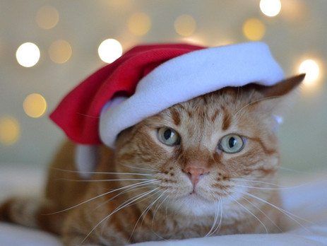 Christmas gifts for cat lovers and owners