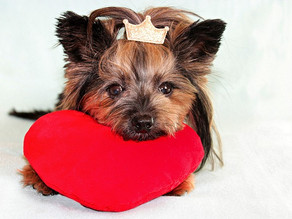 Fabulous Valentine's Day gifts for pets
