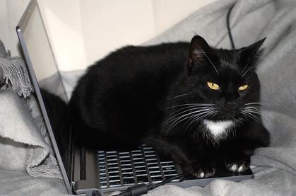 Pawsome Pet Care blog