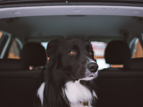 Brexit news, new rules for EU pet travel from 1 January 2021
