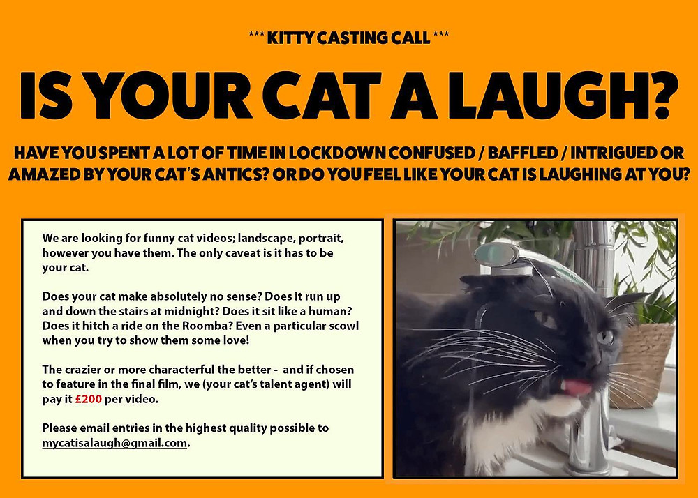 Kitty casting call