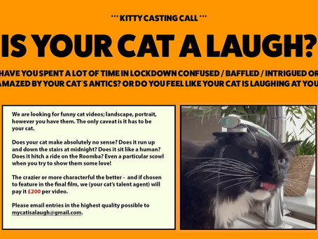 £200 for funny cat videos