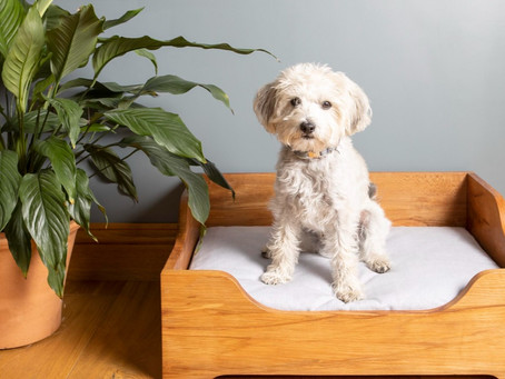 Win a luxury dog bed worth £890!