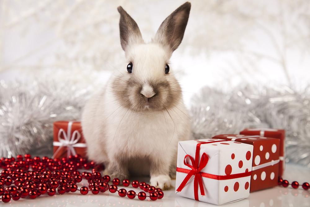 Christmas bunny rabbit