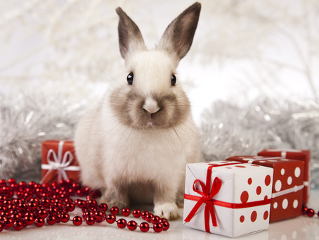 Christmas gifts for rabbit lovers and owners