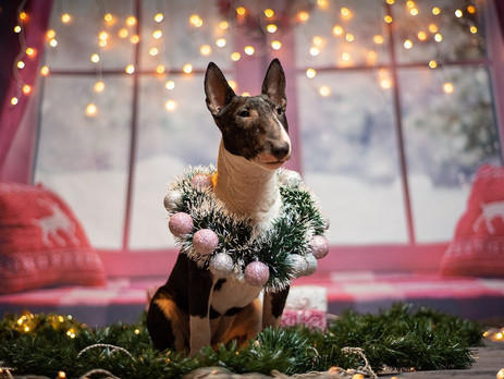 Best advent calendars for dogs 2020
