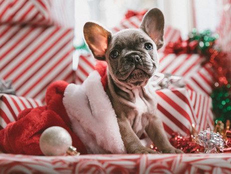 Christmas gifts for dog lovers and owners