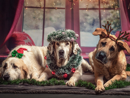 Christmas food, drink and foliage hazards for dogs