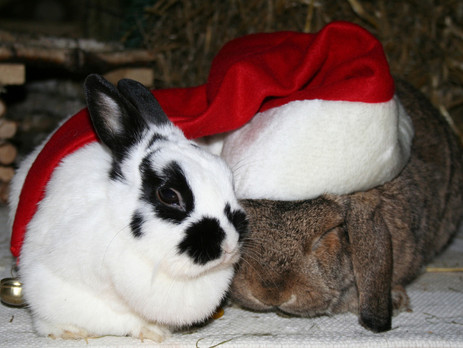 Best advent calendars for small furry animals 2020
