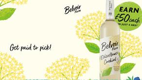 Pick elderflowers for Belvoir Farm and get paid cash