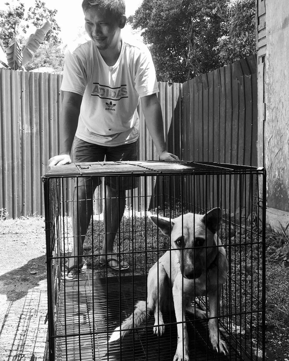 saving a dog tomohon liv
