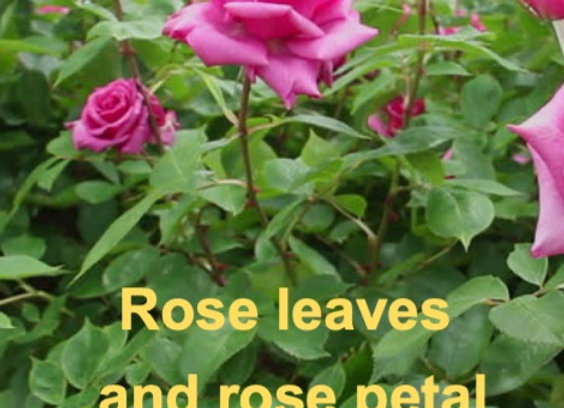 Rose leaf and petal veiners