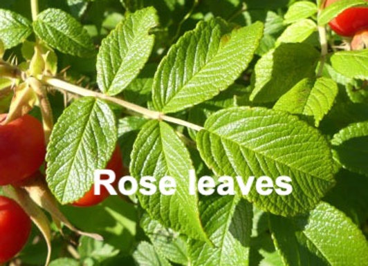 Rose leaf veiners