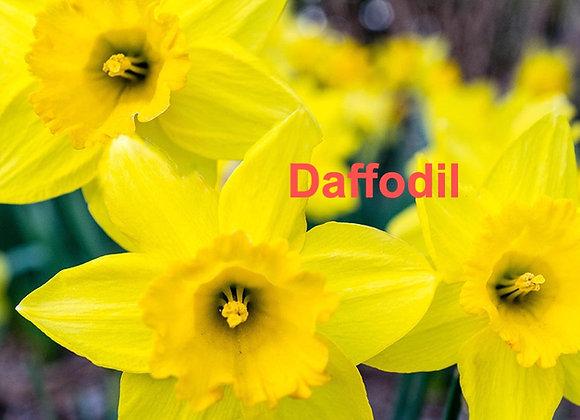 Daffodil Veiner
