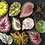 Thumbnail: Begonia Veiners and Cutters