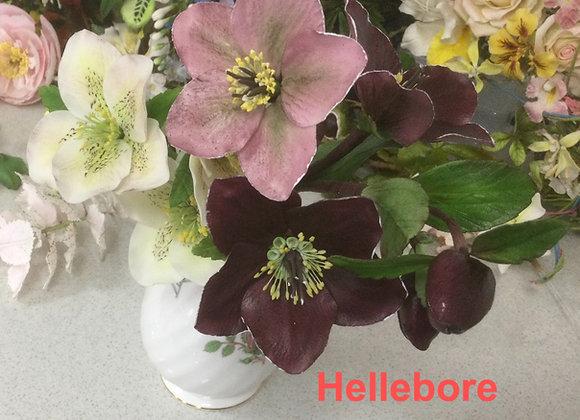 Hellebore Veiners and Petals
