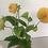 Thumbnail: Dahlia Leaf Veiners