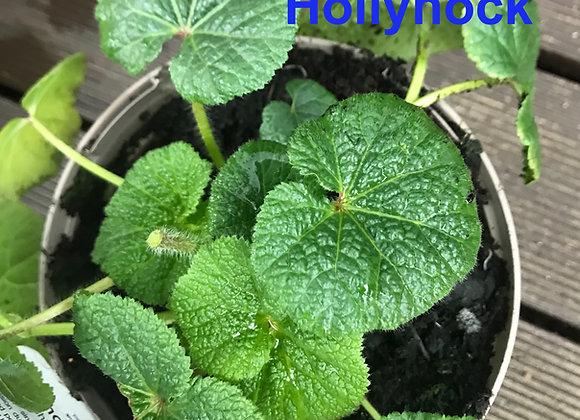 Hollyhock Leaf Veiners