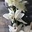 Thumbnail: Cymbidium Orchid Set