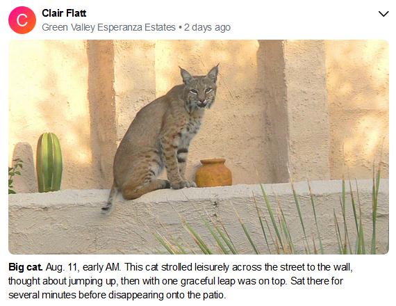 Clint Flatt Big Cat Nextdoor july 2020.P