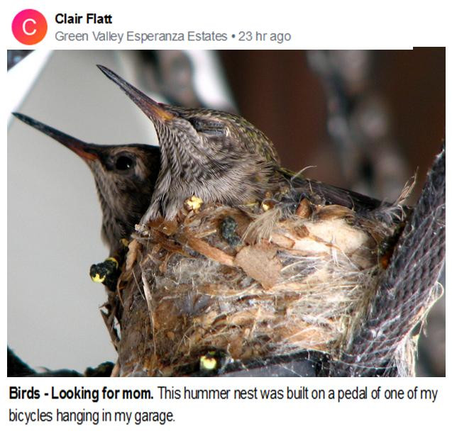 Clair Flatt Hummers looking for mom July