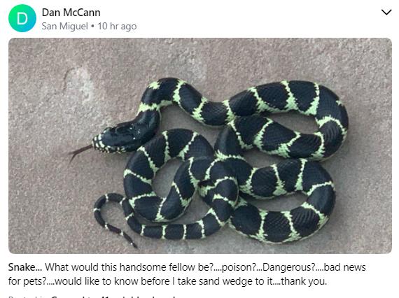 Dan McCann King Snake.PNG