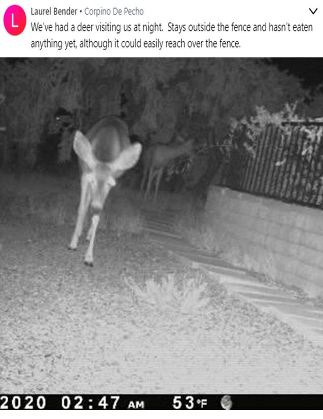 Deer at night 6 2020.jpg