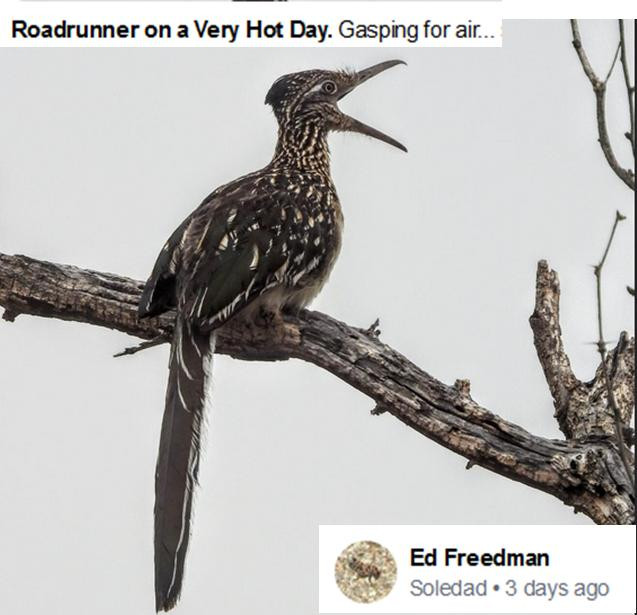 Ed Freedman Roadrunner gasping July 2020