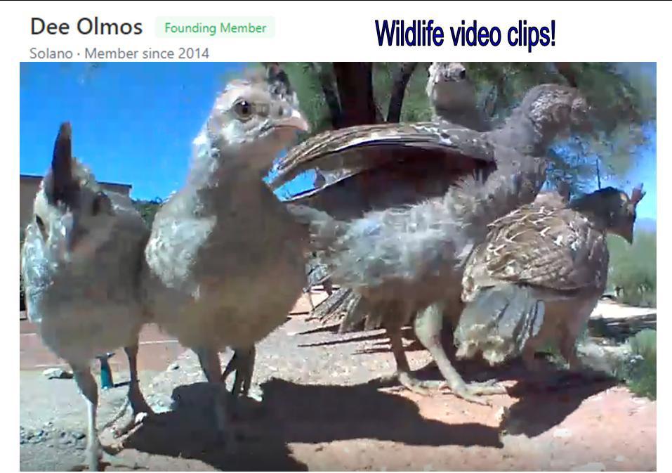 Dee Olmos video clips image.jpg