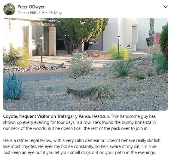Coyote by Peter ODwyer.PNG