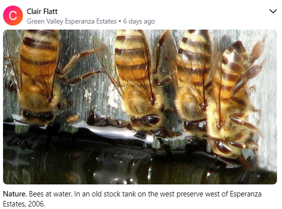 Clair Flatt Bees in old stock tank 7 202