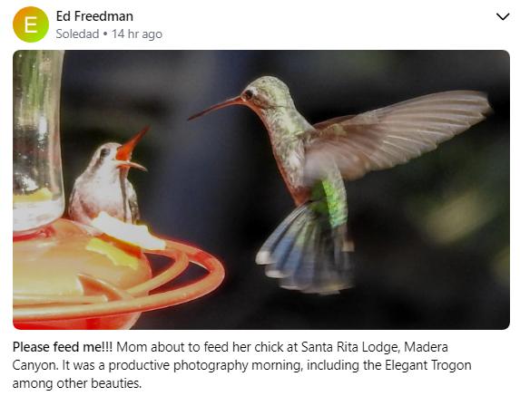 Broad Billleed Humming bird