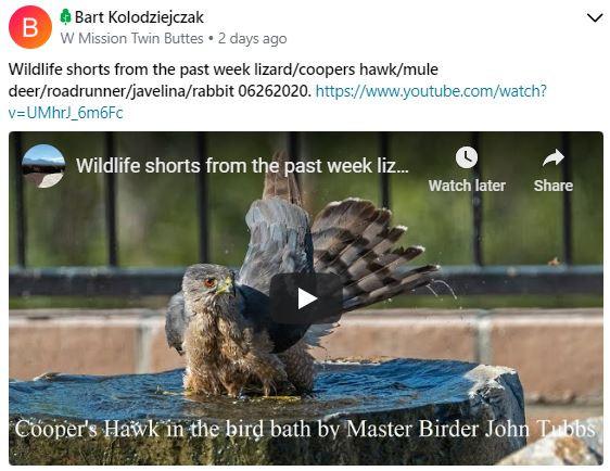 Bart Kolodziejczak wildlife shorts video