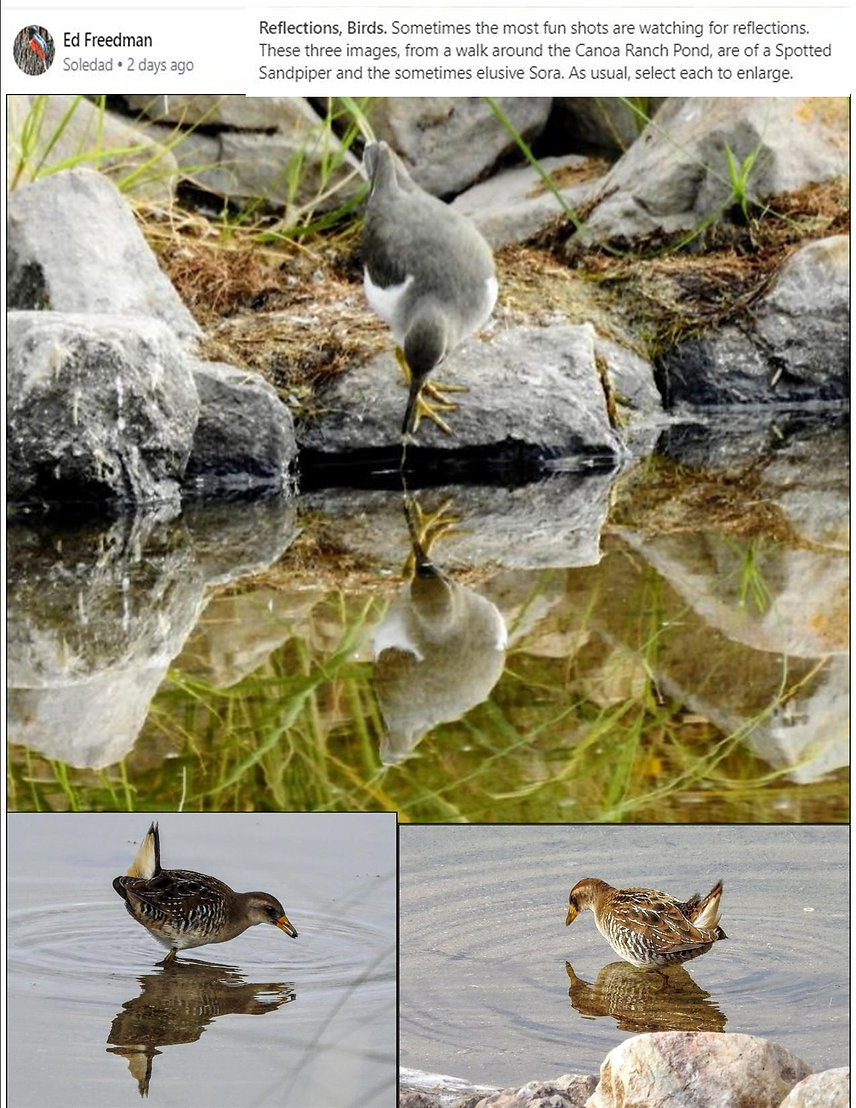 Ed Freedman Reflections Birds Sandpiper